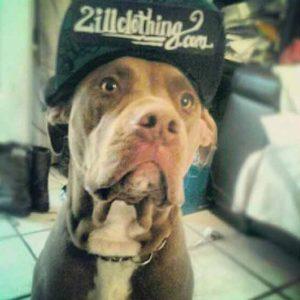 2ill_pitbull