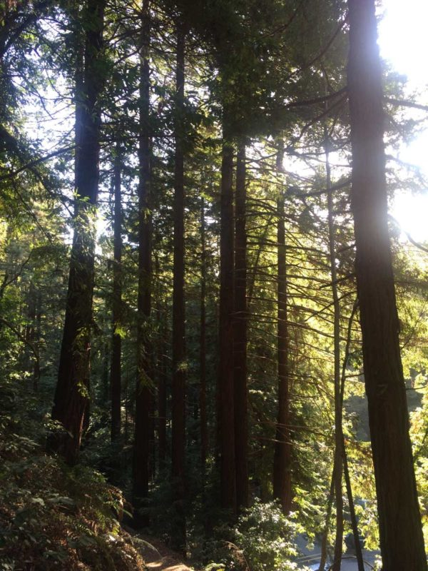 2017-01-01-14-10-28_santa_cruz_trees